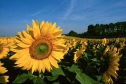 Agrár -környezetgazdálkodási kifizetés
