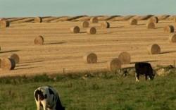 Az állattenyésztési ágazat fejlesztése - trágyatároló építése-